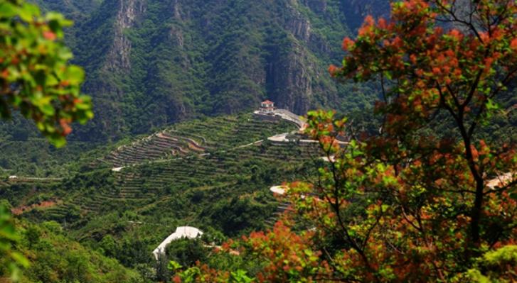 房山区2019年新一轮百万亩造林绿化工程施工启动