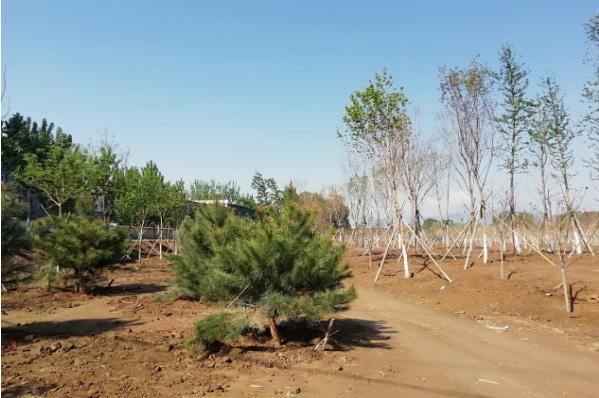 阎村镇张庄造林地块完成主体工程建设